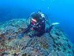 青い海!! サンゴいっぱい、カヤマ島ポイント!!