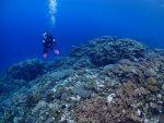 青い海を求めて、西表島ポイント遠征!!