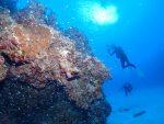 本日は、マクロ生物を中心に、黒島ポイント遠征!!